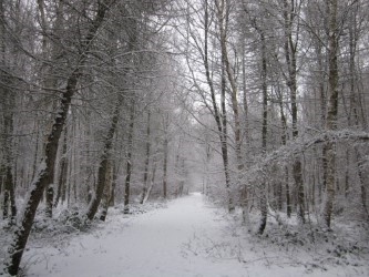 A snowy day in the woods